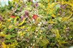 Kräuterbüschel012